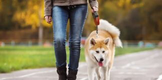 pas i vlasnik u setnji