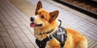 korgi policajac