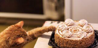 macka i torta