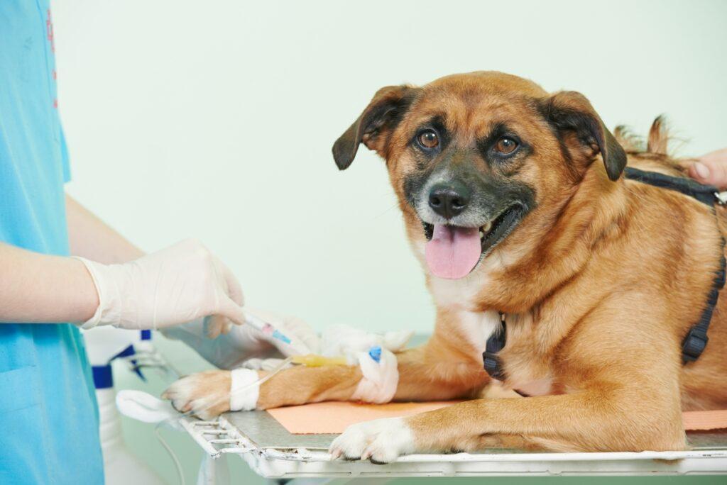 pas donor krvi