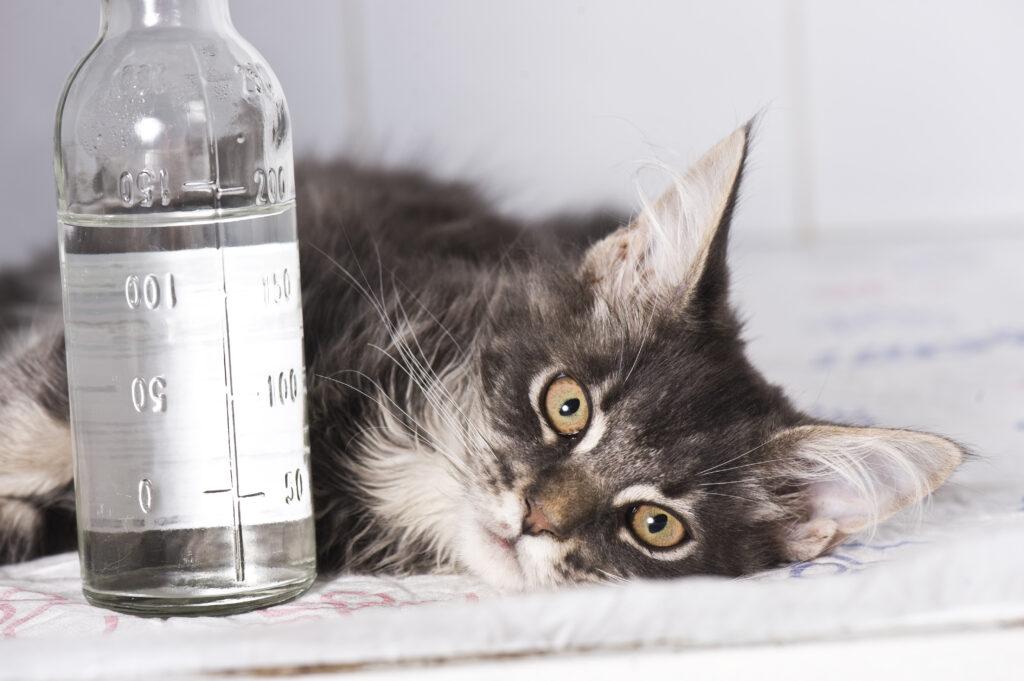 macka kod veterinara