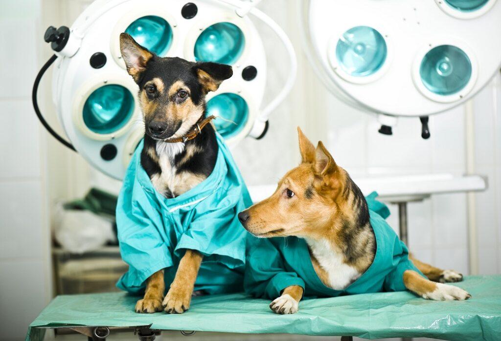 sterilizacija