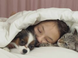 pas i macka u krevetu