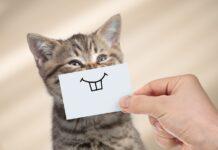 dentalna higijena macaka