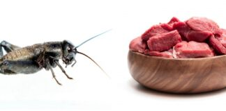 insekti meso