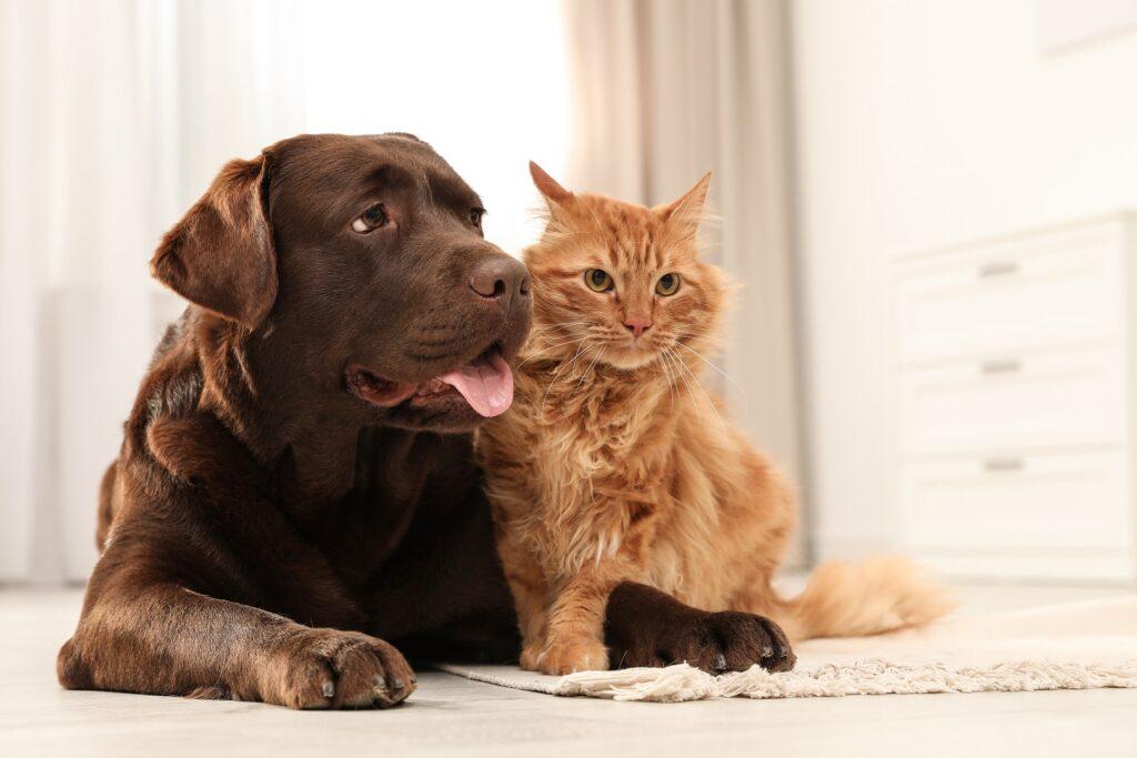 macka i pas