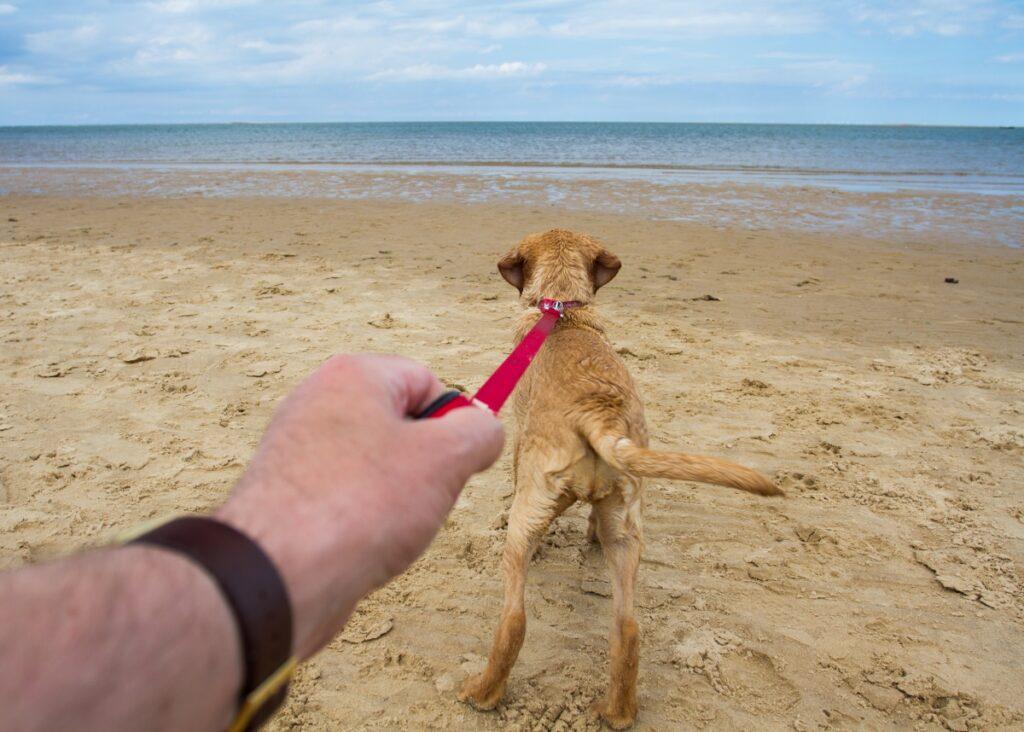 pas na plazi