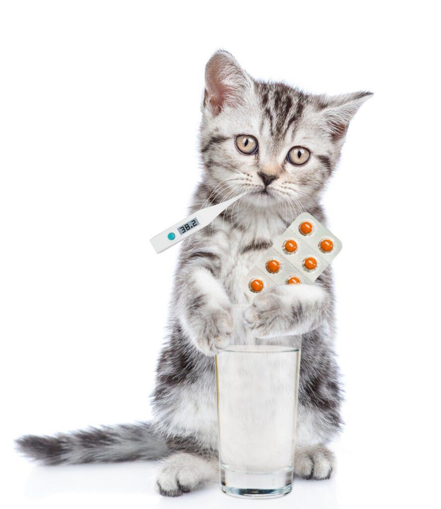 prehladjena macka
