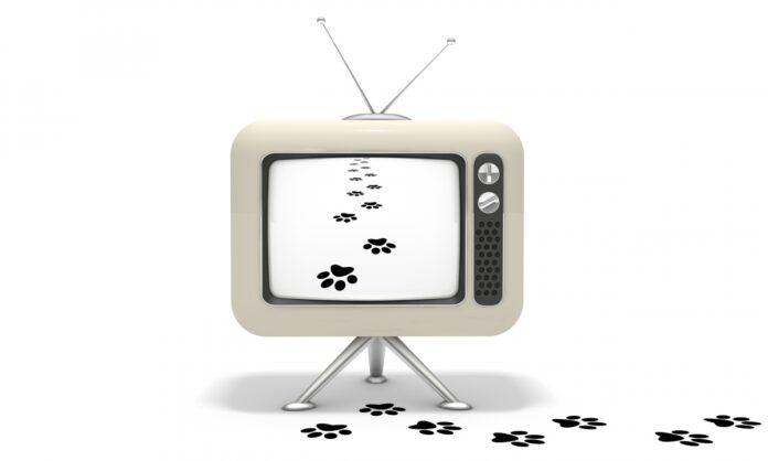 televizor i ljubimci