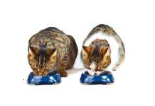 dve macke jedu