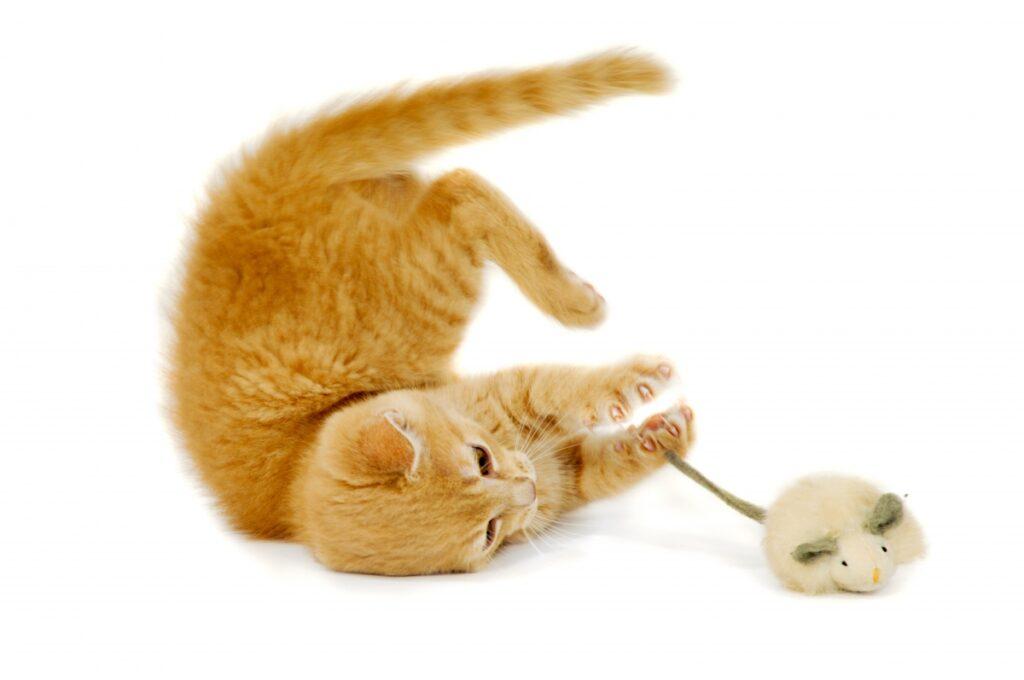 mace se igra