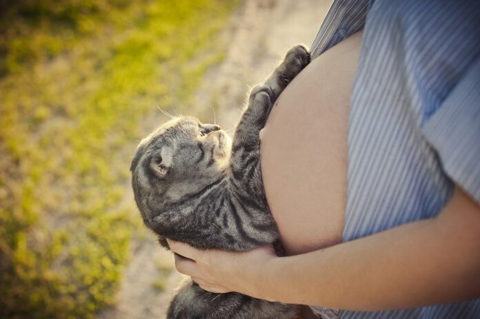 trudnica i macka