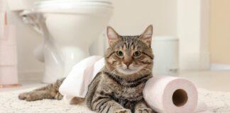 macka u kupatilu