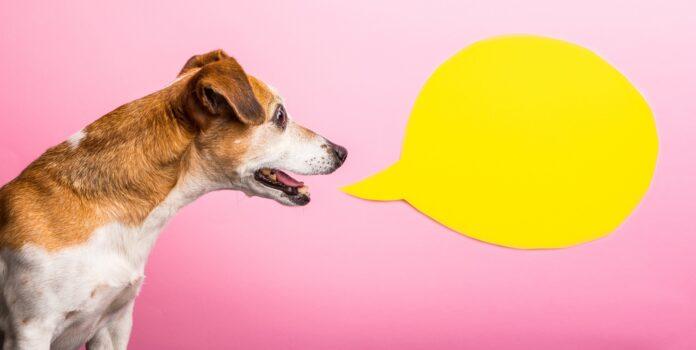 poruka psa