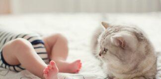 macka i beba