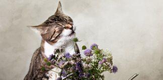 cvece i macka