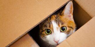 macka u kutiji