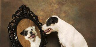 pas i ogledalo