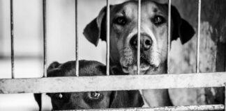 zatvoreni psi