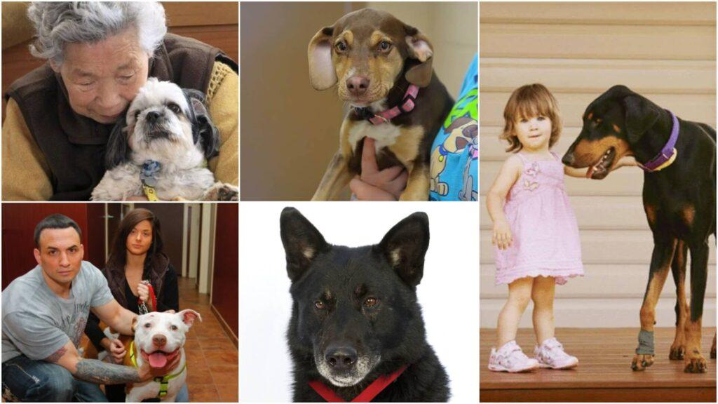 psi spasili vlasnike
