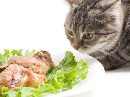 macka i piletina