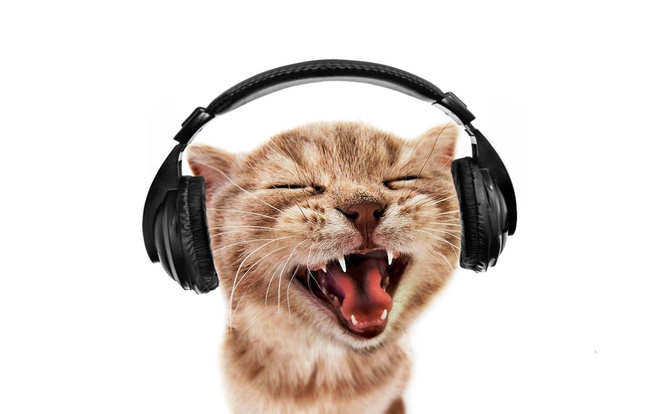 macke i muzika