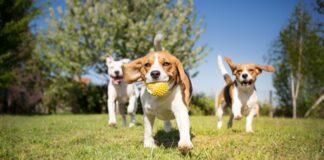 psi u parku