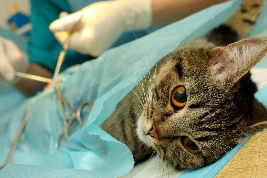 macka na operaciji