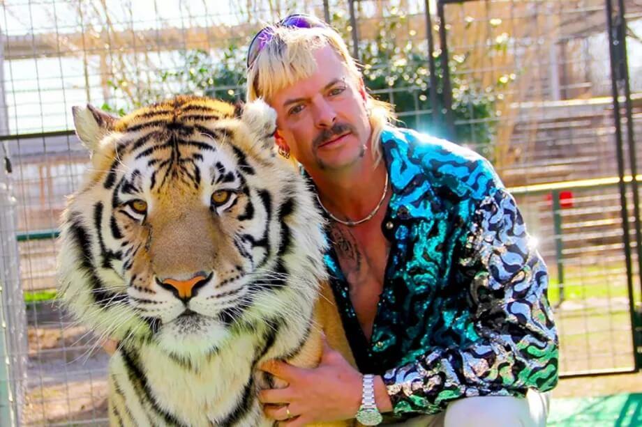 dzo egzotik kralj tigrova