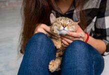 kako macka pokazuje ljubav