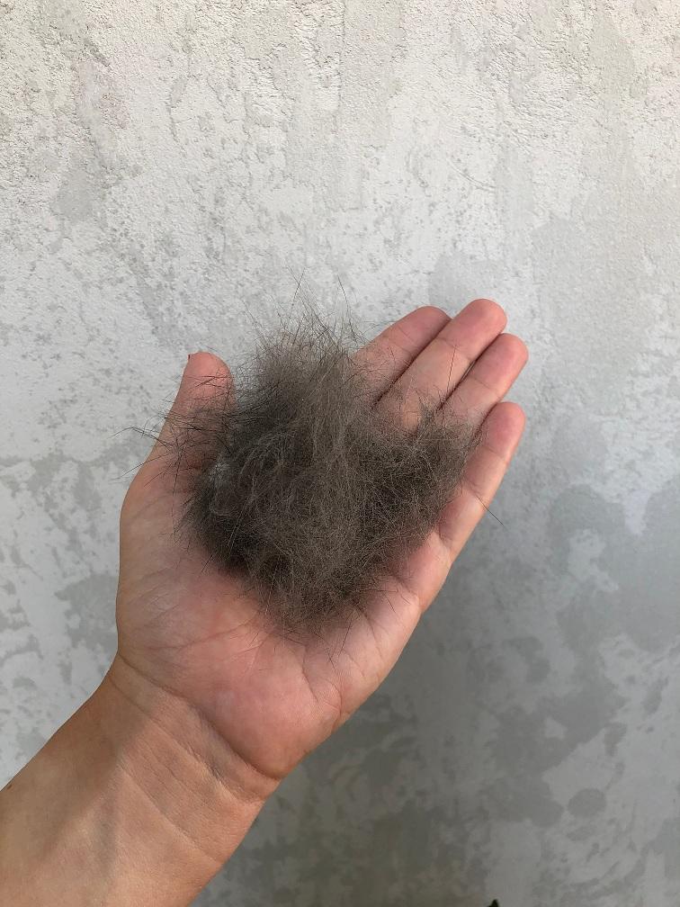 macki opada dlaka