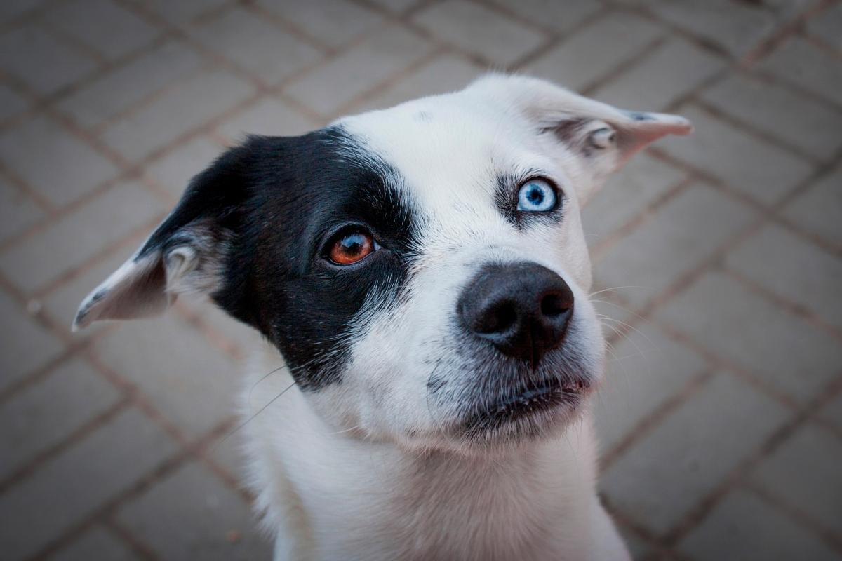 pas sa ocima razlicite boje