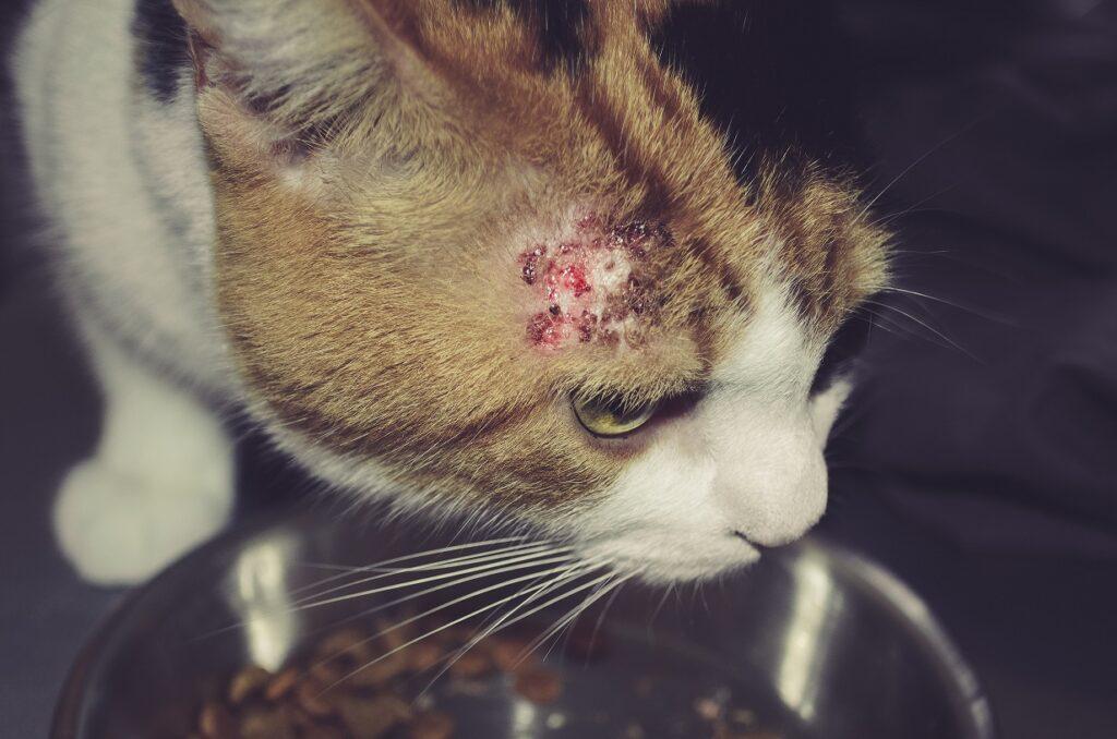 alergije kod macaka