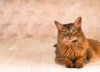 somalijska macka