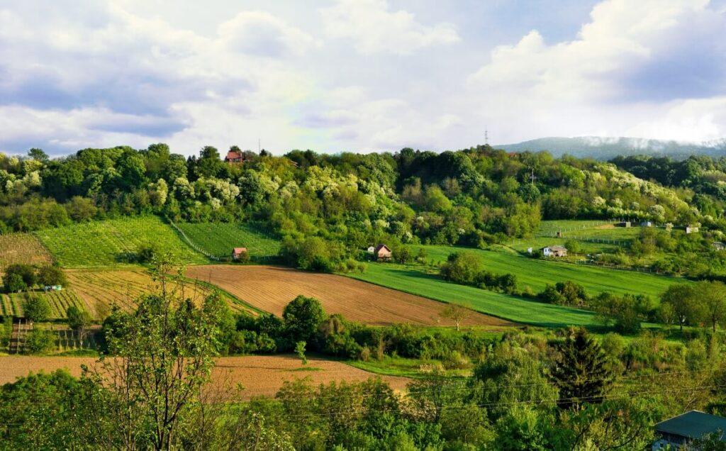 pet frendli leto u srbiji