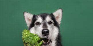 pas i povrce