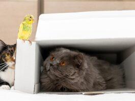 macka i papagaj u stanu