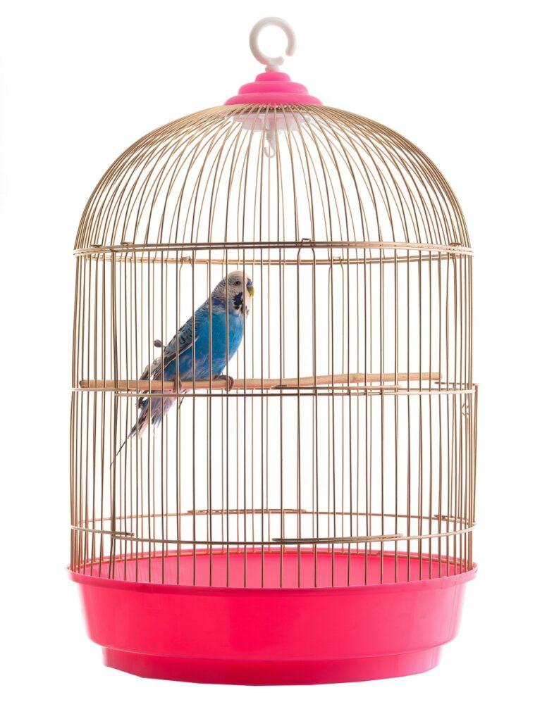 papagaj u kavezu