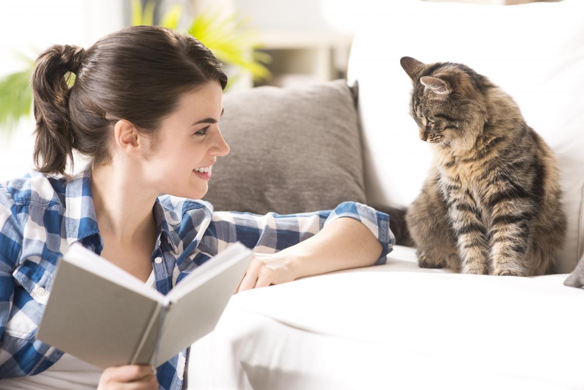 obaveze vlasnika macke