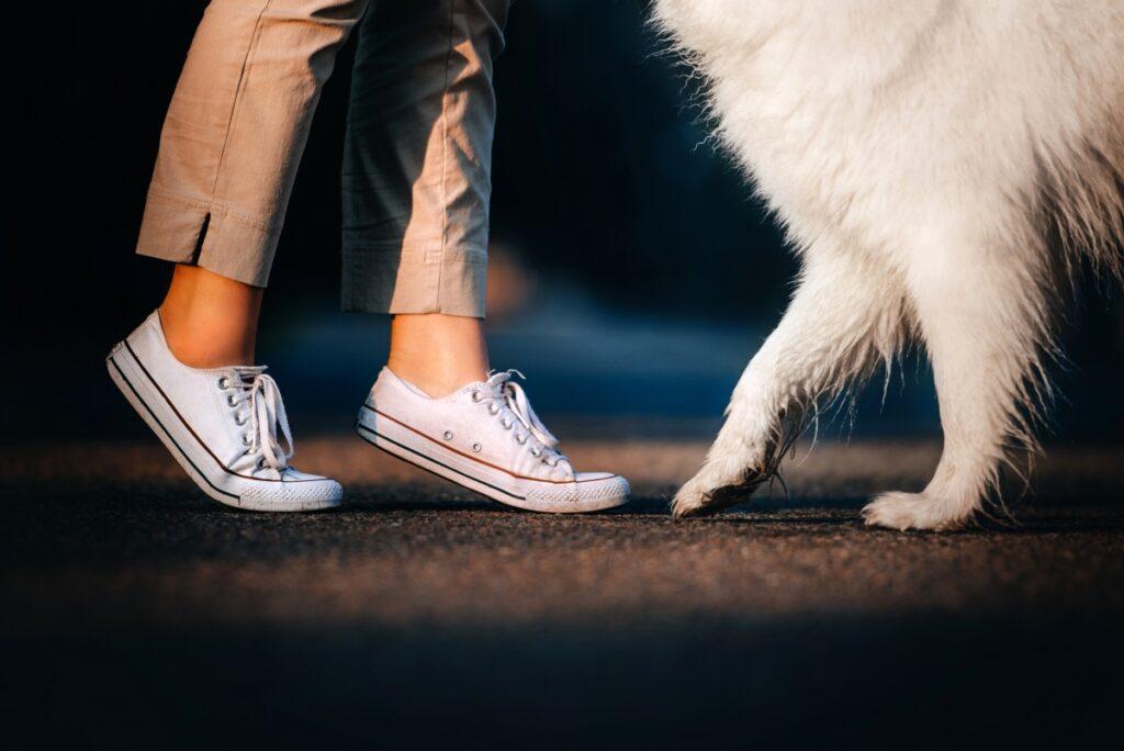 odnos coveka i psa