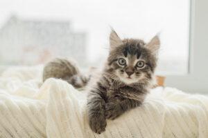 mačka na krevetu