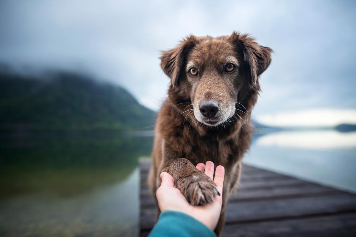 pas i čovek