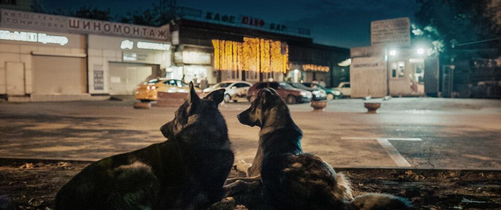 Svemirski psi