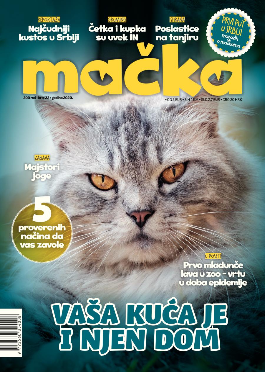 magazin mačka