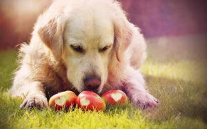 pas jede jabuku