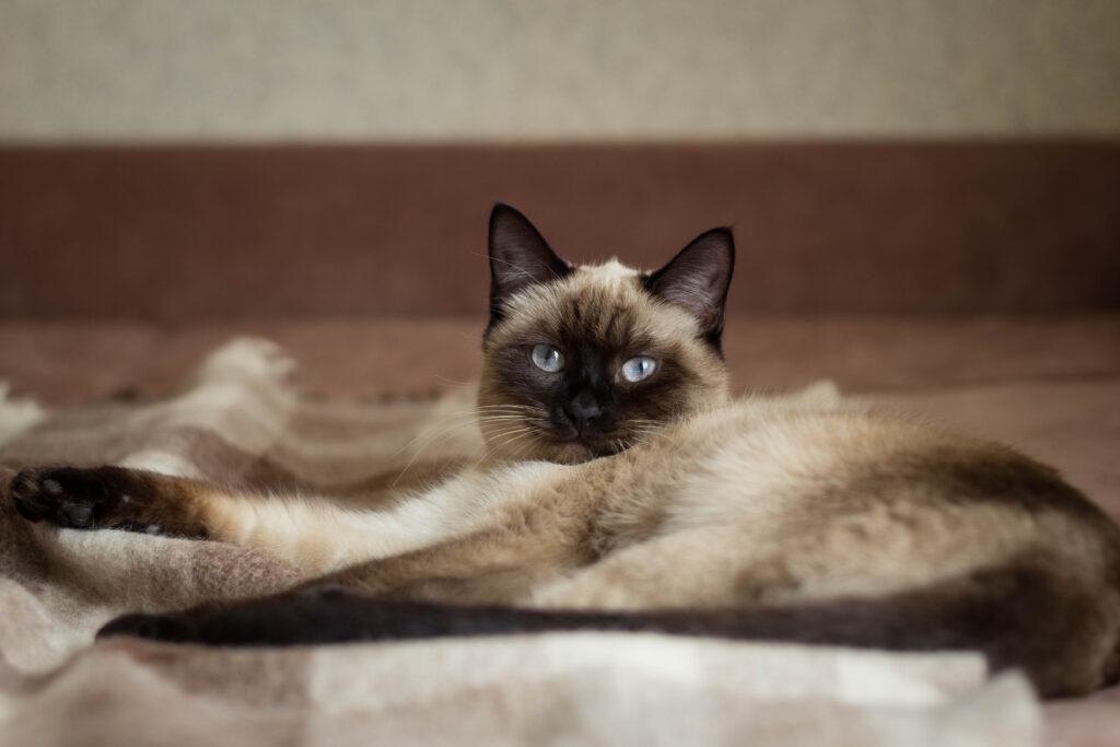tai mačka