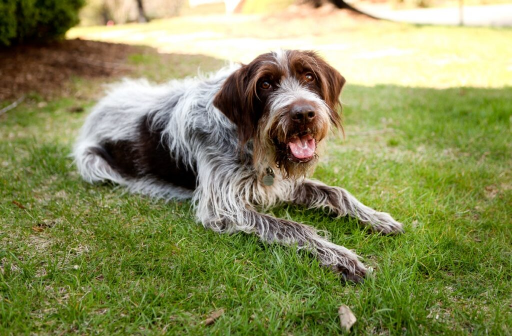 pas na travi