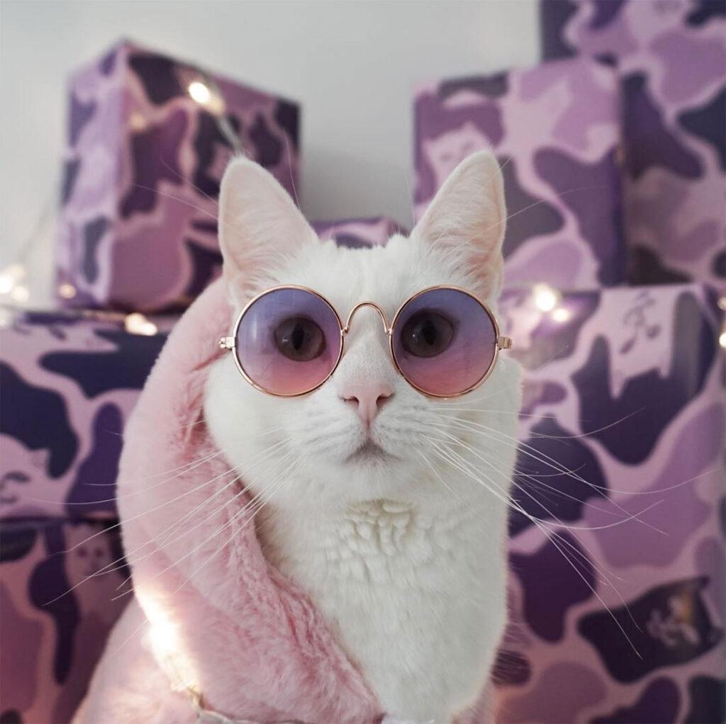 maćka