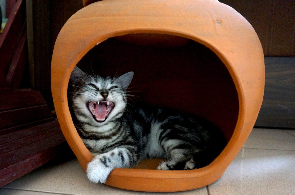 maca u kutiji