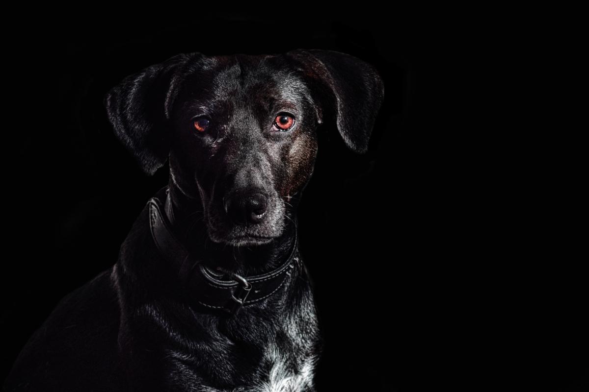 sindrom crnog psa